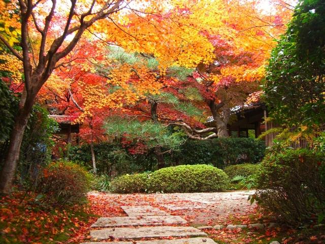 【京都紅葉☆赤!緑!黄!橙!朱!隠れ家的な京都紅葉ツアー♪撮影にも登場する廊下で記念撮影!】~色が奏でるとっておきの紅葉案内~